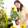 Gardening - woman holding flower pot with sunflower — Stock Photo #4684745
