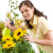 Gardening - woman sprinkling water on sunflower blossom — Stock Photo #4684762