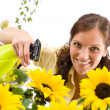 Gardening - woman sprinkling water on sunflower — Stock Photo #4684767