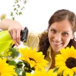 Gardening - woman sprinkling water on sunflower — Stock Photo #4684767