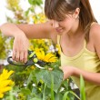 Gardening - woman cutting sunflower with pruning shears — Стоковая фотография