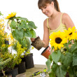 Gardening - smiling woman holding flower pot with sunflower — Stock Photo #4684775