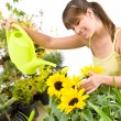 Gardening - woman with watering can and flowers pouring water — Foto Stock