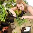 Gardening - woman trimming bonsai tree - Stock Photo