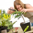 Gardening - woman trimming bonsai tree — Stock Photo #4684856