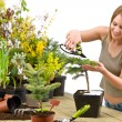 Gardening - woman trimming bonsai tree — Stock Photo #4684861