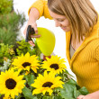 Gardening - woman sprinkling water to sunflowers — Stock Photo