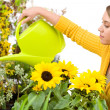 Gardening - woman pouring water to flowers — Stock Photo