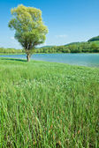 Mountain lake with green meadow — Stock Photo