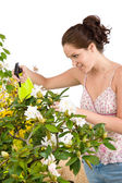 Gardening - woman sprinkling water on Rhododendron flower blosso — Stock Photo