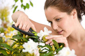Gardening - woman cutting flower with pruning shears — Stock Photo