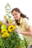Gardening - woman sprinkling water on sunflower blossom — Stock Photo