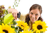 Gardening - woman sprinkling water on sunflower — Stock Photo