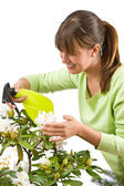 Gardening - woman sprinkling water on blossom flower — Stock Photo