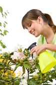 Gardening - woman sprinkling water on Rhododendron blossom flowe — Stock Photo