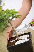 Jardinagem - feminina mãos cuidar da árvore dos bonsais — Foto Stock