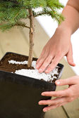 Gardening - female hands take care of bonsai tree — Foto Stock
