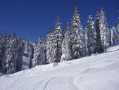 Ski piste — Стоковое фото