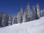 Skidor pisten — Stockfoto