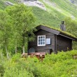Typical norwegian house with grass on the roof — Stock Photo