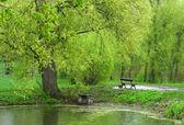 Primavera en un parque — Foto de Stock
