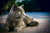 The grey cat sits in a grown — Stock Photo