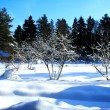 Stock Photo: Winter garden on good sunny weather