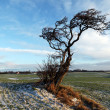 Tree lonely in winter countryside landscape — Stock Photo