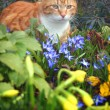 Stock Photo: Cat red flowers
