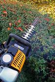 Hedge cutting petrol cutter — Stock Photo
