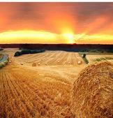Hay straw bale field — ストック写真