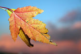 Autumn fall leaf — Stock Photo