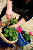 Planting gardening — Stock Photo