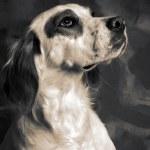 Постер, плакат: Dog irish setter