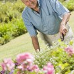 Senior man working in garden — Stock Photo