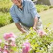 Senior man working in garden — Stock Photo #4752908