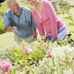 Senior couple working in garden — Stock Photo