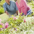 Senior couple working in garden — Stock Photo #4752914