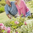 Foto Stock: Senior couple working in garden