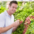Young man shopping for fresh produce - Stock Photo