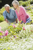 Senior couple working in garden — Stock Photo