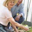 Woman in greenhouse planting seeds and man holding watering can - Stock Photo