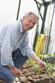 Man in greenhouse holding shovel smiling — Stock Photo