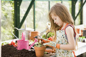 Young girl in greenhouse putting plant in pot — Stock Photo