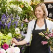 Woman working at flower shop smiling - ストック写真
