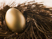 Golden Nest Egg — Stock Photo