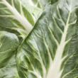 Pak Choi, Bok Choy, Chinese Cabbage - Stock Photo