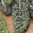 Savoy Cabbage Leaves — Stock Photo
