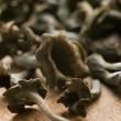 Wild Mushrooms - Foto de Stock  