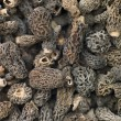 Stock Photo: Morel Mushrooms